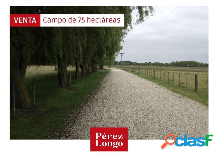 Campo de 75 hectáreas sobre ruta 88