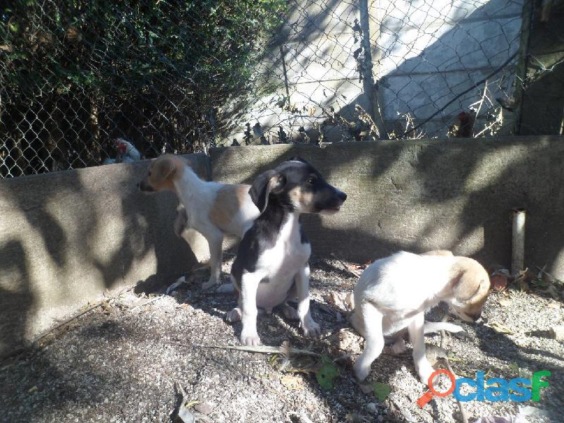 Adoptar cachorros 6