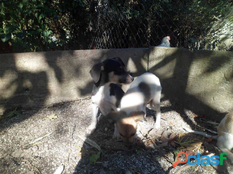 Adoptar cachorros 8