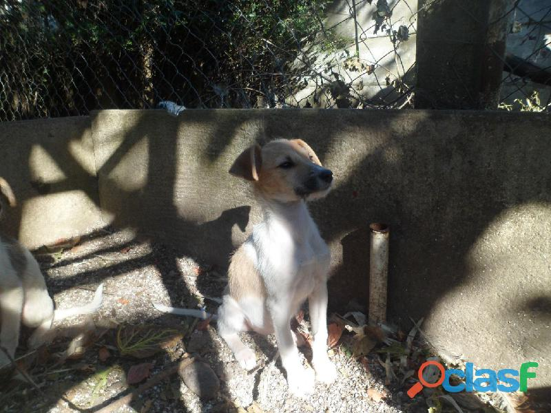 Adoptar cachorros 7
