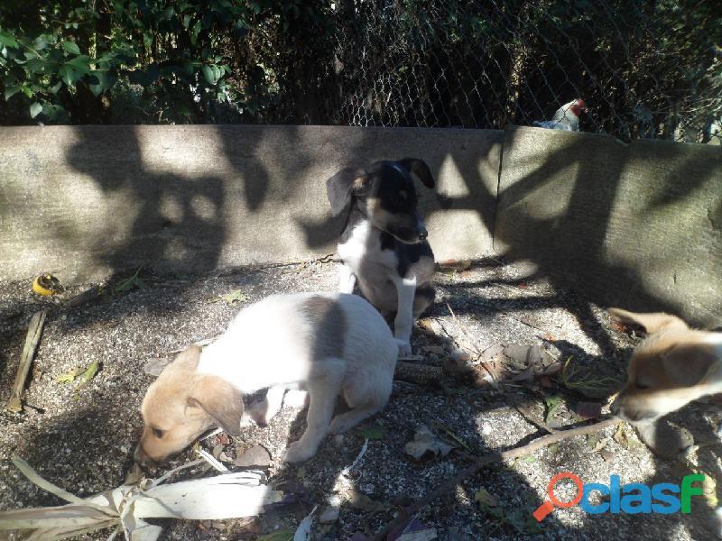 Adoptar cachorros 4