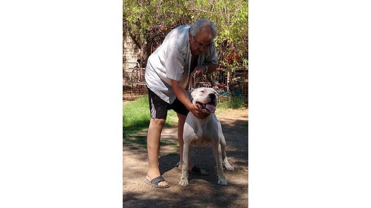 Dogo argentino cachorros en venta.