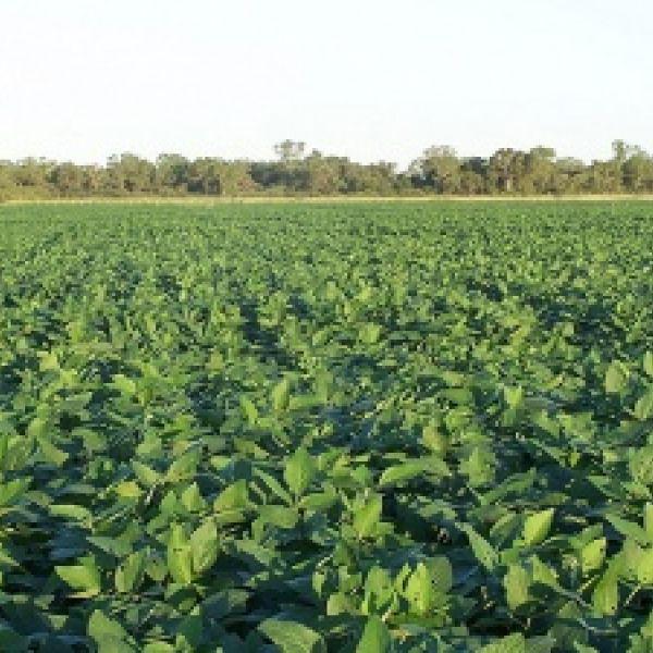 Venta campo agricola 50 has zona salguero-cordoba