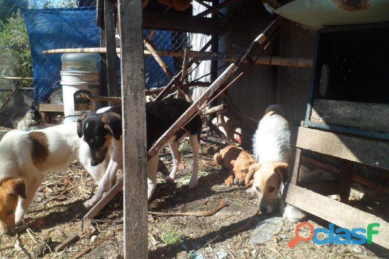 Adoptar cachorros en City Bell, Villa Elisa, Gorina, Gonnet, Pereyra 1