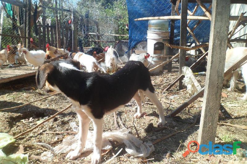 Adoptar cachorros en City Bell, Villa Elisa, Gorina, Gonnet, Pereyra 2