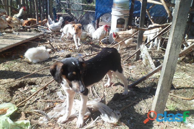 Adoptar cachorros en City Bell, Villa Elisa, Gorina, Gonnet, Pereyra 3