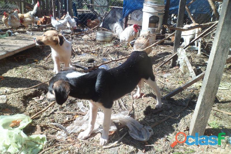 Adoptar cachorros en City Bell, Villa Elisa, Gorina, Gonnet, Pereyra 4
