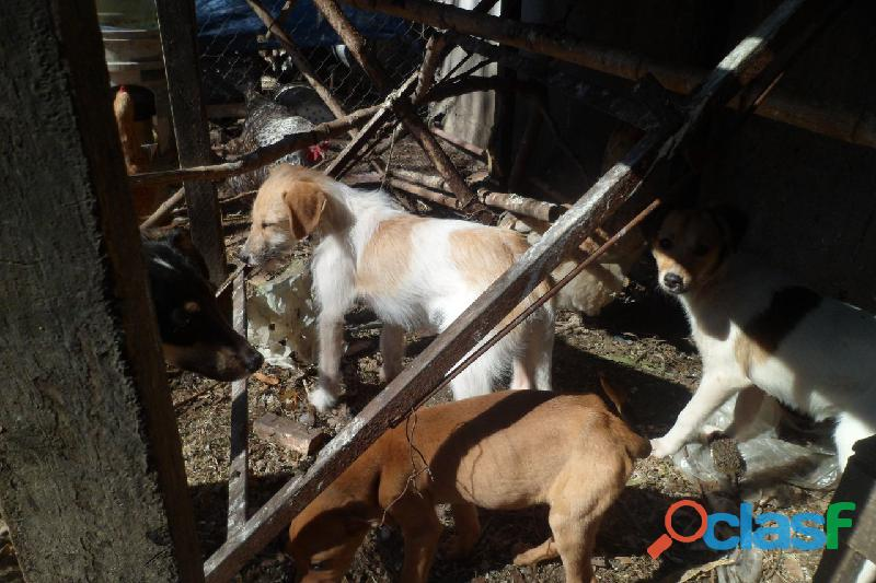 Adoptar cachorros en City Bell, Villa Elisa, Gorina, Gonnet, Pereyra 5