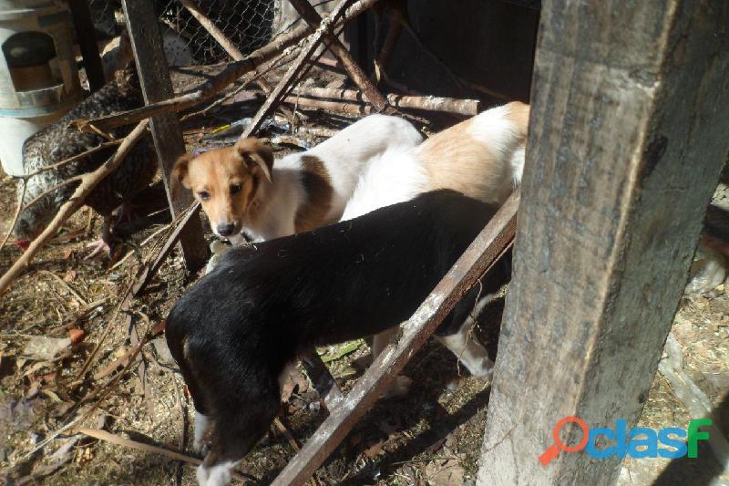 Adoptar cachorros en City Bell, Villa Elisa, Gorina, Gonnet, Pereyra 6